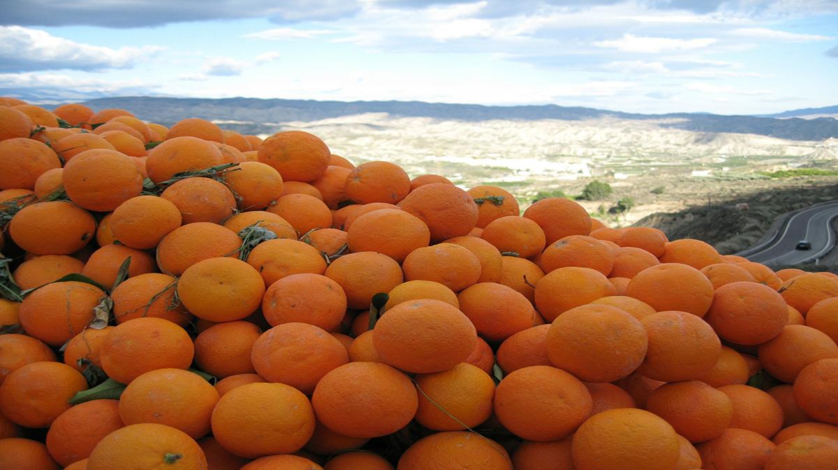 импорт цитрусовых